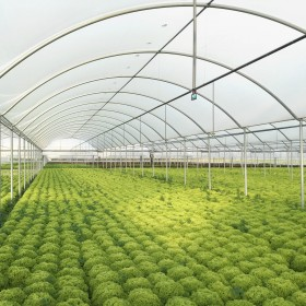 Jiggly Greenhouse® Apex Clear Plastic Greenhouse Grow Film (4-Year, 6 Mil)