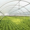Jiggly Greenhouse® Apex Poly Grow Film - Clear (4-Year, 6 Mil) - 40 ft. Wide x 40 ft. Long