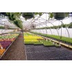 Jiggly Greenhouse® 2' x 4' Black Plastic Bench Top Panel For Greenhouses (Top Panel Only)