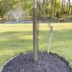 "36"" Tall Rigid Mesh Tree Guard For 4"" Diameter Tree [1/2"" Sq. Mesh] - Tree Trunk Protection (Plastic) Jiggly Greenhouse® - Installation Shown"