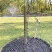 "24"" Tall Rigid Mesh Tree Guard For 4"" Diameter Tree [1/2"" Sq. Mesh] - Tree Trunk Protection (Plastic) Jiggly Greenhouse® - Installation Shown"