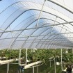 Clear Plastic Greenhouse Grow Film (4-Year, 6 Mil) Jiggly Greenhouse® Apex - Size Cut To Order