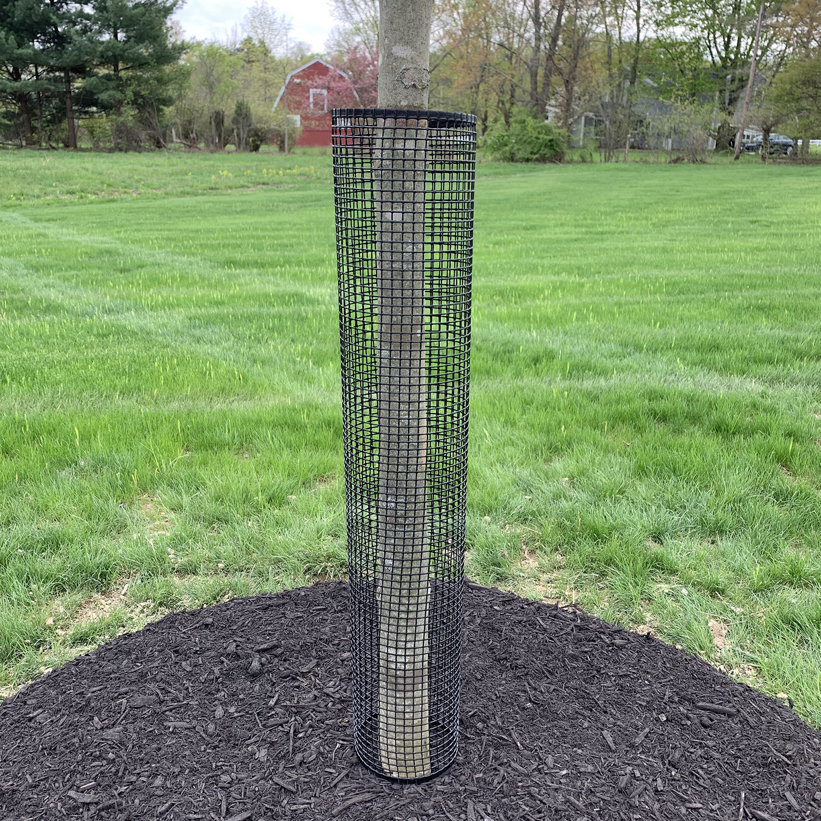 Jiggly Greenhouse® Tree Guard